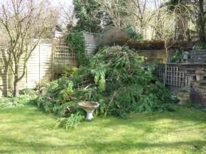 Почистване на двор с клони и боклуци
